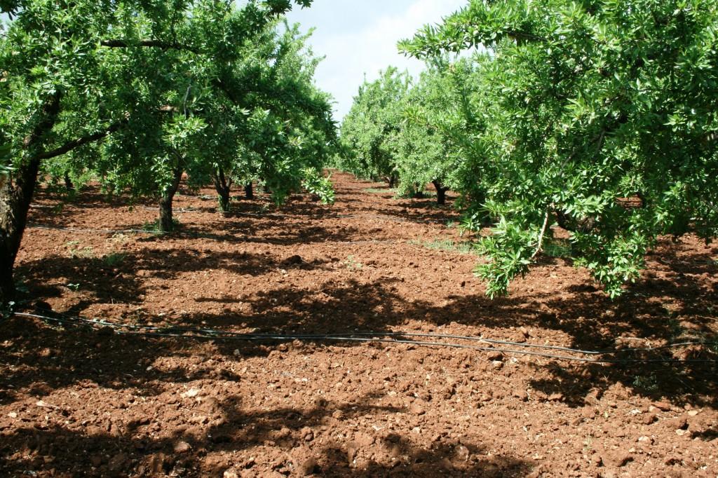 """Essai """"Gestion de l'irrigation"""" chez des espèces arboricoles"""