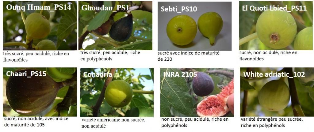 Quelques clones locaux et variétés étrangères de figuier de qualité particulière