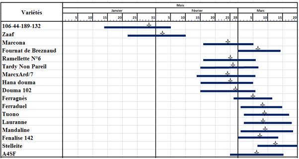 Figure 1 : Diagramme de floraison des principaux cultivars à floraison précoce, moyenne et tardive.