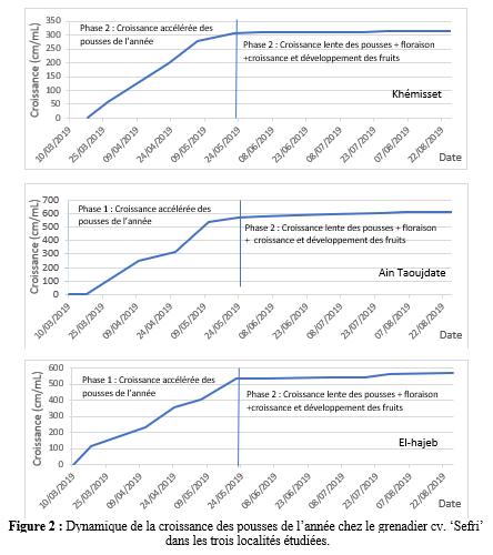 Figure 2 : Dynamique de la croissance des pousses de l'année chez le grenadier cv. 'Sefri'  dans les trois localités étudiées.