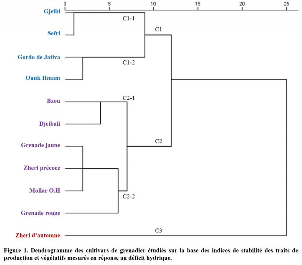 Figure 1. Dendrogramme des cultivars de grenadier étudiés sur la base des indices de stabilité des traits de production et végétatifs mesurés en réponse au déficit hydrique.