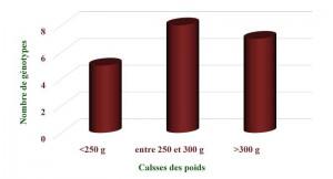 Figure 2 : Répartition des génotypes de grenadier en fonction des classe du poids