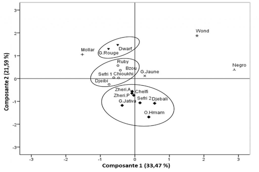 Figure 4 : Répartition multidimensionnelle ACP des cultivars par le biais des paramètres biochimiques