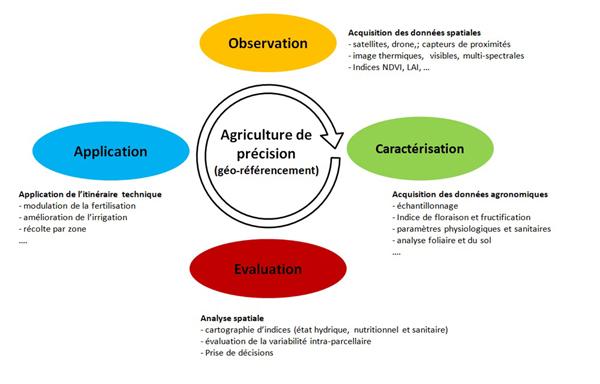 Figure 1. Illustration du concept cyclique de l'Agriculture de Précision (d'après McBratney et Taylor, 2000; Mathews, 2013). Ce schéma met l'accent sur l'importance du géo-référencement, au cœur des quatre étapes fondamentales du processus de la gestion de la variabilité