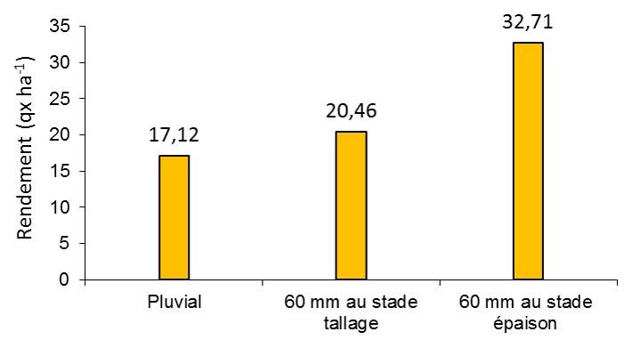 Figure 1. Effets de l'irrigation d'appoint sur le rendement en grain du blé tendre (Bendidi et al., 2013)