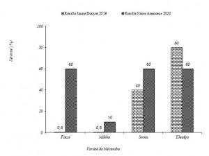 Figure 1: Comportement des variétés marocaines de blé tendre à l'égard de la rouille jaune à Douyet durant 2018-19 et à l'égard de la rouille noire à Annoceur durant 2019-20.
